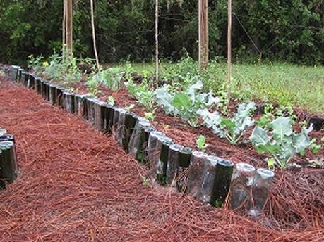 Raised Garden Bed With Wine Bottle Edging